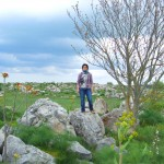 Ailanto tra le pietre di una cava in agro di Gravina
