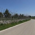 Roadside, Cassano delle Murge (Ba)