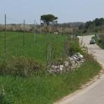 """Roadside in """"agro di Cassano delle Murge"""""""