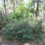 Pulicchie wood - Gravina (Ba)