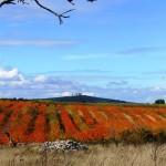 """""""Murgiano"""" landscape"""