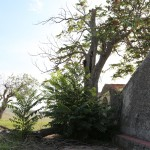 Feudo San Francesco - Andria