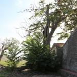 """""""Feudo San Francesco"""" - Andria (Bat)"""