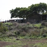 Colamonaco