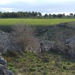 Jazzo infestato in agro di Spinazzola (Ba)