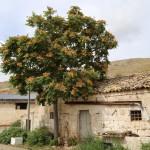 """""""Località Madama""""  - Gravina (Ba)"""
