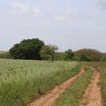 Altamura (Ba) landscape