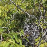 Guardianello mountain - Minervino murge (Bat)