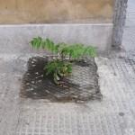 Bari, via Amendola