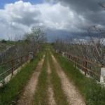 Strada dell'Acquedotto