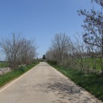 Strada in agro di Cassano delle murge