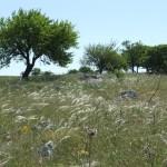 """""""Murgiano"""" landscape (Francesca Casella)"""