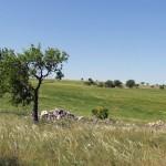 Paesaggio murgiano